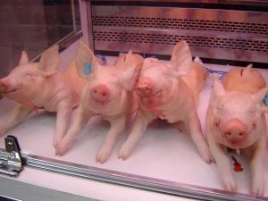 happy piggies!
